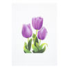 Tulips-3d-pop-up-cards-manufacturer-cover